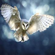 spiritueel medium Merlijn - in gesprek